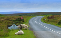 road with sheep-1444617